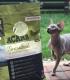 Gyvūnų prekės internetu (šunims ir katėms)